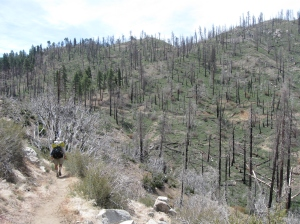 G Dub hiking through a burned zone after Big Bear. It was an extremely windy day and we could hear trees going down all around us.