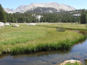 Crabtree Meadow, the launching ground for a Mt. Whitney summit